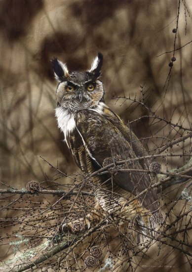 017 Great Horned Owl550px