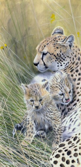 cheetah threesome550px