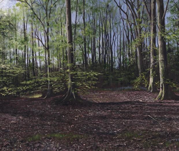 woodland-shadows